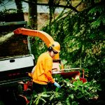 Emergency Lenior Tree Service Near Me to Hire