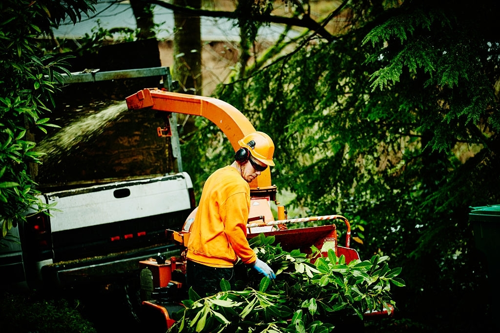Lenior Tree Service Near Me